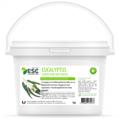 Eucalyptus – Respiration, bronchite et toux