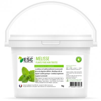 Mélisse – Estomac sensible et acidité gastrique cheval